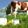 Đặc sản sữa bò Mộc Châu