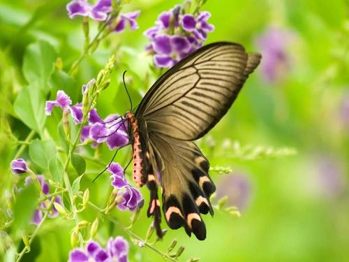 Vườn bướm Butterfly Garden Thái Lan