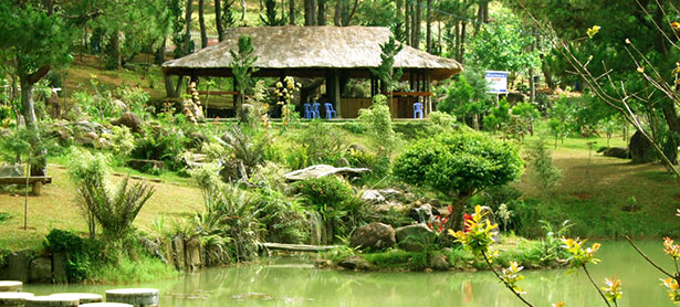 Thung lũng Vàng gồm nhiều cụm đảo bon sai với rất nhiều những cây cảnh quý hiếm